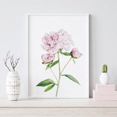 퓨어 모란 꽃 액자 보테니컬 그림 인테리어 포스터