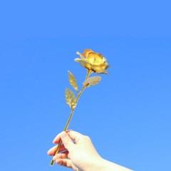 GOLD 금장미 장식 [황금 장미 꽃 카네이션 어버이날 부모님 선물]