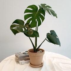 아마란스 공기정화 식물 몬스테라 중형 이태리 토분 세트