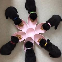 발라당 고양이 꽃잎 다묘 식기 밥그릇 물그릇 길냥이 간식그릇