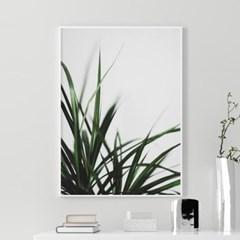 캄그래스 식물 액자 나뭇잎 그림