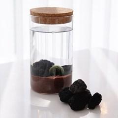 네이처 테마 국산 마리모 키우기 DIY 세트(마리모:소)