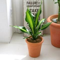 [공기정화식물] 푸른숲 토분 4종세트