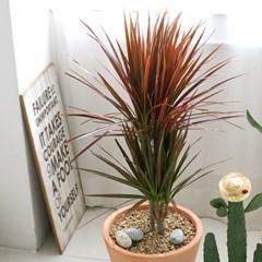 [공기정화식물] 푸른숲 토분 3종세트 C