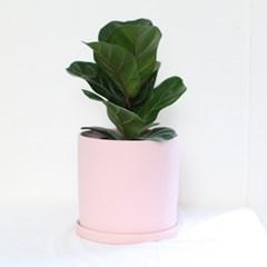 핑크 모던화분 중형떡갈고무나무 공기정화식물