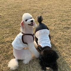 러블리댕댕 강아지 오가닉 크롭티 & 크롭원피스