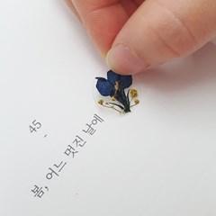 압화 미니 스티커_유채꽃