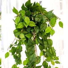 풍성한 초록잎 조화 넝쿨