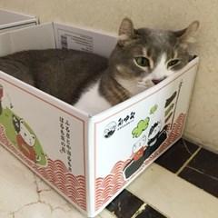 발라당 고양이 박스 스크래처 냥모나이트 숨숨집 스크레쳐