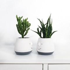 [행복하자]스마일화분+키우기 쉬운식물1종