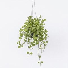 키우기 쉬운 에어플랜트 공기정화 행잉 식물 6종 모음전_(1326627)