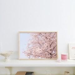 Cherry blossom (벚꽃 계절)