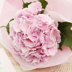 연핑크/연블루 수국 꽃다발 (생화, 전국택배)