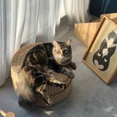 고양이 라탄 하우스 강아지 라탄 방석 스툴