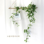 클레마티스 잎바인