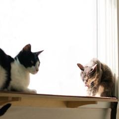 고양이선반_냥반-600