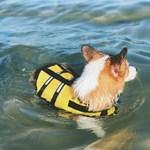 5H펫 이중잠금 강아지 구명조끼 애견 수영복