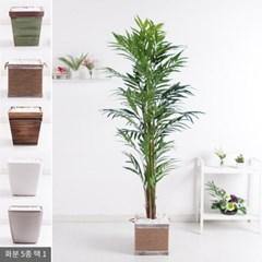 밤부팜트리set 185cm_KO(3-3) 조화 인조 나무 FREOFT_(1834995)