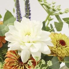 화이트 다알리아 꽃다발 M (생화, 전국택배)