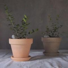 아마란스 올리브나무 이태리 토분 세트