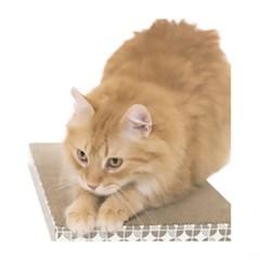 논다 평판 고양이 장난감 스크래처