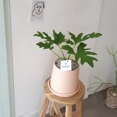 피치 화분 속 공기정화식물 셀렘 40cm