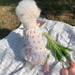 러블리댕댕 강아지 꽃망울 원피스