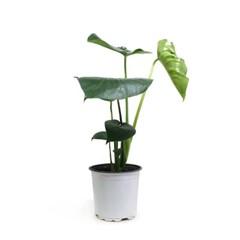self-gardening 15~18cm 중형화분 분갈이용 식물