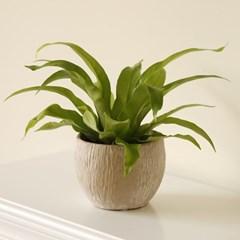 [plant] 아비스 뉴트럴 식물화분_(729137)