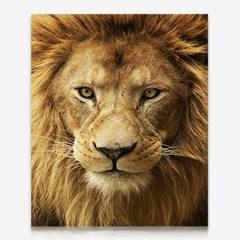 얼큰이 사자 DIY 보석십자수 십자수 비즈세트_(2462511)