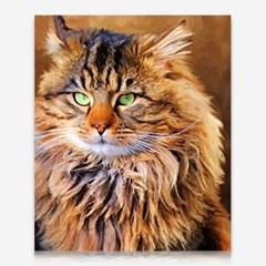 멋진 고양이 DIY 보석십자수 십자수 비즈세트_(2462508)