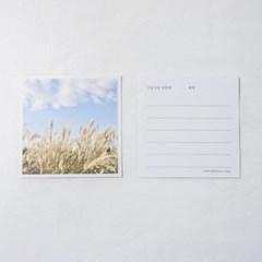 [메리필름] 가을 엽서 2종 set(갈대, 코스모스)
