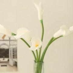 천년의사랑 화이트 에덴 카라꽃 한가지_(732251)