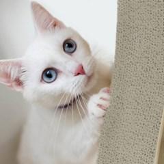고양이 스크래쳐 수직형 평판형 본품 리필 (캣닢 증정)_(2048257)