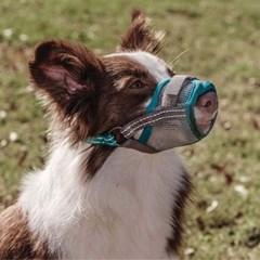쿰피콤피 강아지 세이프티 입마개