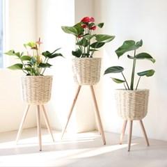 실내공기정화식물 중대형 라탄 우드스탠드 화분