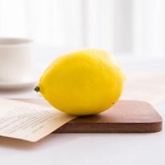 레몬 모형