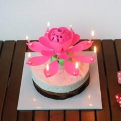 멜로디 연꽃초 생일축하 폭탄초 회전초 5color 인싸 촛불 케이크초