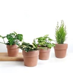 물관리가 편한 커버형 이태리토분+실내식물