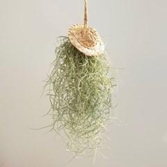 미니 수염틸란 밀짚모자 미세먼지 공기정화식물