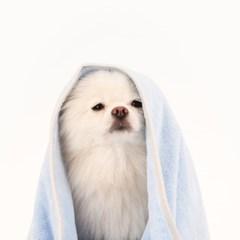 [퍼리굿] 흡수력 강한 초 극세사 반려동물 강아지 수건, 바스 타올