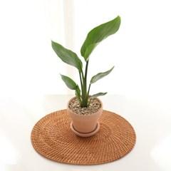 인테리어 식물 극락조 이태리토분+토분받침대 SET