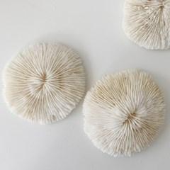 버섯 산호 오브제 사진촬영 소품