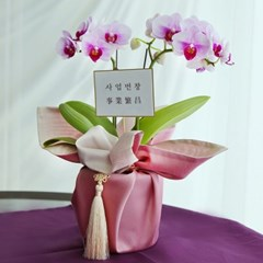 선물용 호접 서양난 식물화분 [보자기기프트패키지] [전국택배]