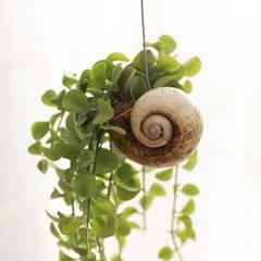 고동 디시디아 알찬 인테리어 공기정화식물