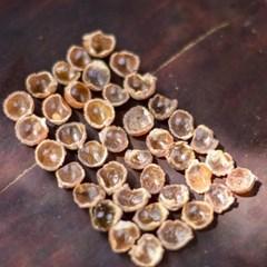 제로웨이스트 친환경 주방세제 세탁세제 천연열매 허니소프넛