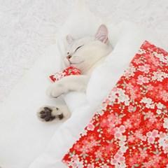 캣배딩 고양이 베개+이불(55x40cm) 애견침대 쿠션