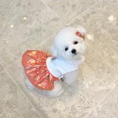 강아지 한복 - 홍매화 겨울 퓨전한복