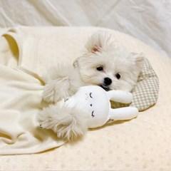 잠자는 숲속의 달이 토끼인형 개달당 삑삑이 장난감 애착인형