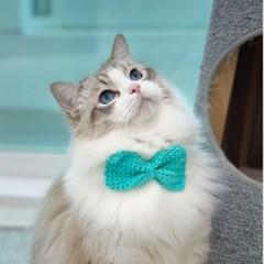 개달당 왕리본 턱받이 강아지목걸이 고양이케이프